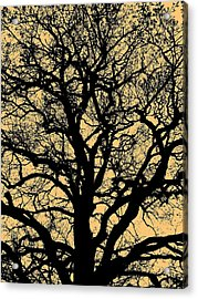 My Friend - The Tree ... Acrylic Print by Juergen Weiss