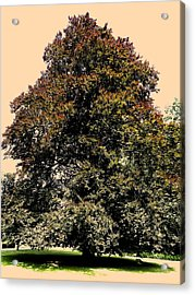My Friend The Tree Acrylic Print by Juergen Weiss