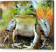 My Frog Friend Acrylic Print by Patricia Januszkiewicz