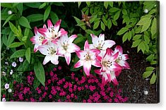 Acrylic Print featuring the photograph My Lilies by Patricia Hiltz