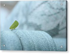My Little Green Friend Acrylic Print by Nina Mirhabibi