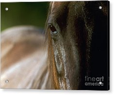Acrylic Print featuring the photograph My Neigh-bor's Horse by Doug Herr