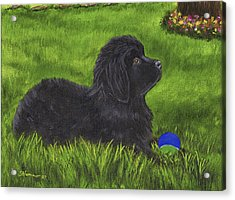 Acrylic Print featuring the painting My New Ball by Sharon Nummer