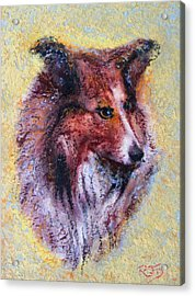 My Pal Shelty Acrylic Print by Richard James Digance