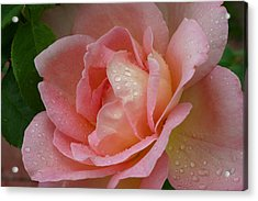 My Pink Rose Acrylic Print by Connie Koehler