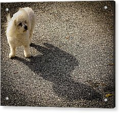 Acrylic Print featuring the photograph My Shadow by Patrice Zinck