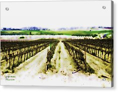 Acrylic Print featuring the photograph My Well-beloved Had A Vineyard by Itzhak Richter