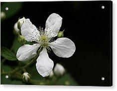Mysterious Pretty White Flower Acrylic Print by Bonnie Boden