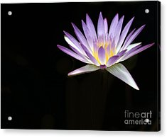 Mysterious Water Lily Acrylic Print by Sabrina L Ryan