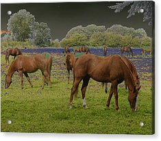 Mystical Horses Acrylic Print by Fred Whalley