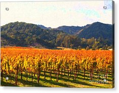 Napa Valley Vineyard In Autumn Colors Acrylic Print