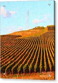 Napa Valley Vineyard . Portrait Cut Acrylic Print by Wingsdomain Art and Photography