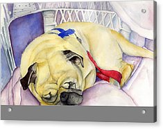 Naptime For Baden Acrylic Print by Paul Cummings