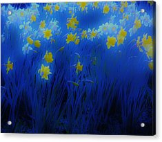 Narcisos Acrylic Print by Xoanxo Cespon
