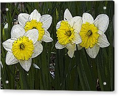 Narcissus Acrylic Print by Michael Friedman