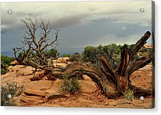 Narley Tree Acrylic Print by Marty Koch