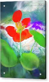 Acrylic Print featuring the photograph Nasturtium by Richard Piper