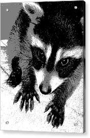 Nataly's Acrylic Print by Ember Findlay