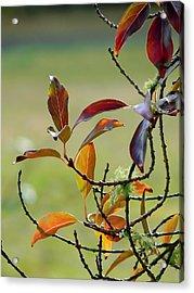 Natural Autumn Acrylic Print by Pamela Patch