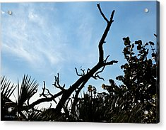 Natural Monument Acrylic Print