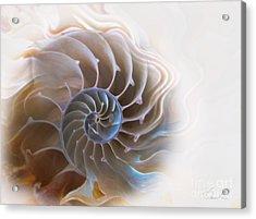 Natural Spiral Acrylic Print