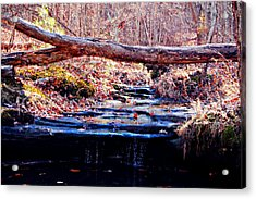 Acrylic Print featuring the photograph Natural Spring Beauty  by Peggy Franz