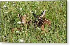 Nature Beauty  Acrylic Print by Glenn Lawrence