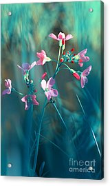 Nature Fantasy Acrylic Print by Tanja Riedel