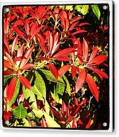 #nature #leaf #pretty #flower #flower Acrylic Print