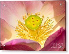 Acrylic Print featuring the photograph Nature by Luciano Mortula