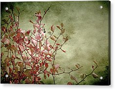 Nature On Parade Acrylic Print by Bonnie Bruno