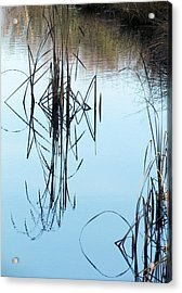 Acrylic Print featuring the photograph Nature's Art by I'ina Van Lawick