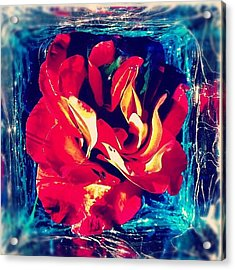 Natures Attack#rose #flower #art Acrylic Print