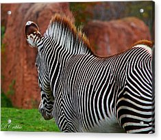 Acrylic Print featuring the photograph Nature's Barcode by Davandra Cribbie