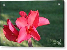 Acrylic Print featuring the photograph Nature's Beauty 2 by Michael Waters