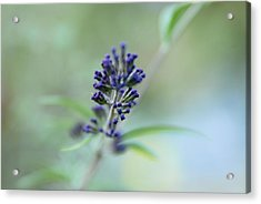 Natures Brush Acrylic Print by