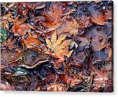 Nature's Confetti 1 Acrylic Print