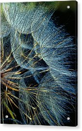 Nature's Fireworks Acrylic Print