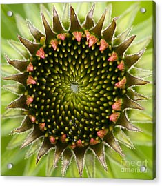 Acrylic Print featuring the photograph Nature's Geometry by Carrie Cranwill