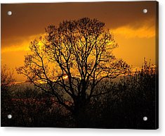 Nature's Gold Acrylic Print by Cat Shatwell