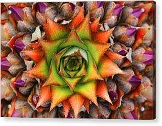 Natures Kaleidoscope Acrylic Print