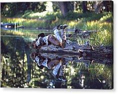 Natures Mirror Acrylic Print