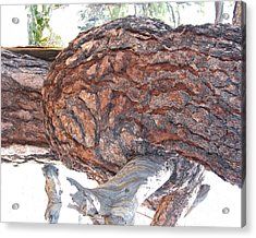 Nature's Natural Abstract Art Acrylic Print by Merton Allen