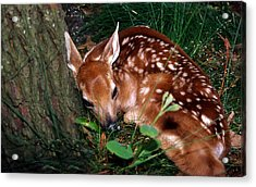 Nature's Precious Creation Acrylic Print by Skip Willits
