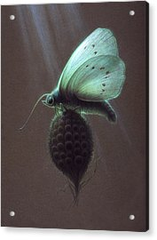 Nausithous Acrylic Print by Shawn Kawa