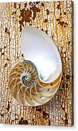 Nautilus Shell On Rusty Table Acrylic Print by Garry Gay