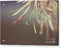 Neigerelle - 06a Acrylic Print by Variance Collections