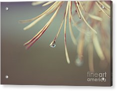 Neigerelle - 06b Acrylic Print by Variance Collections
