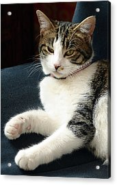 Nellie Acrylic Print by Lisa Phillips