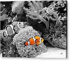 Nemo At Home Acrylic Print by Nick Kloepping